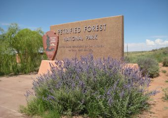 5 keer Petrified Forest National Park